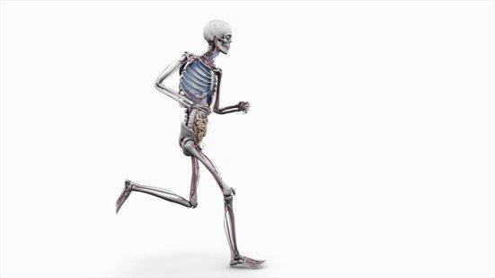 13-2 การสร้างความแข็งแรงของกระดูกในนักวิ่ง-2