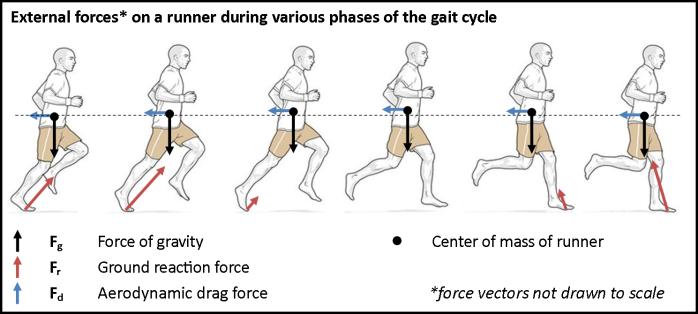 13-2 การสร้างความแข็งแรงของกระดูกในนักวิ่ง-3