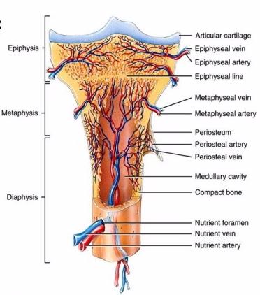 13-5 การสร้างความแข็งแรงของกระดูกอ่อนในนักวิ่ง-3
