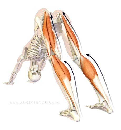 13-6 การสร้างความแข็งแรงของเนื้อเยื่อพังผืดในนักวิ่ง-3