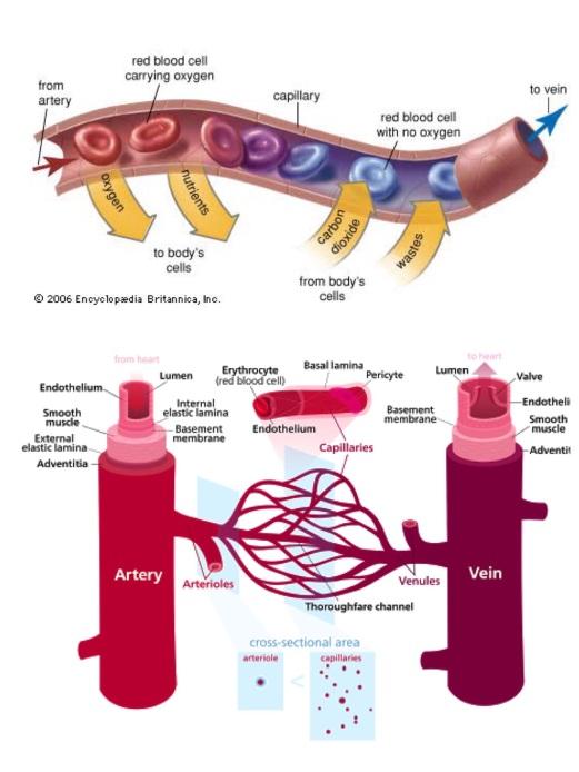 21.3 การสร้างความแข็งแรงของหลอดเลือดนักวิ่ง - 2