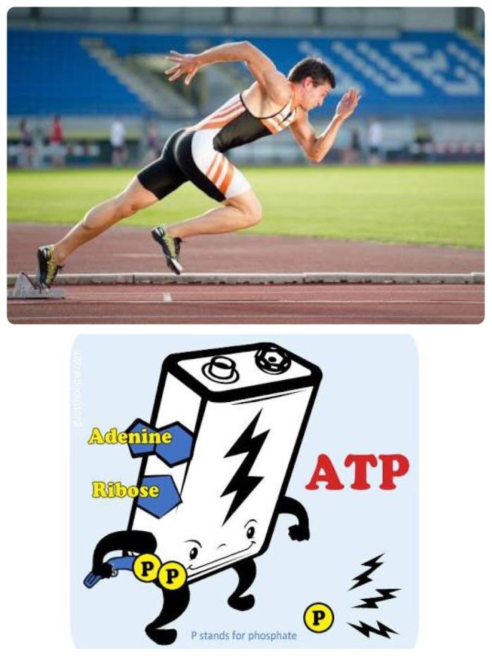 39.1 การสร้างระบบพลังงานสำหรับนักวิ่ง 3