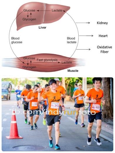 39.4 การสร้างระบบพลังงานสำหรับนักวิ่ง 2
