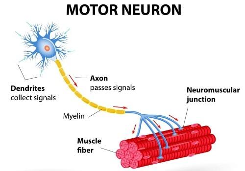 43 - 1 การต่อสายไฟให้กับระบบประสาท 3